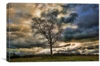 Lonely Tree, Canvas Print