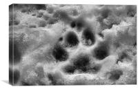 Paw Print In The Snow, Canvas Print
