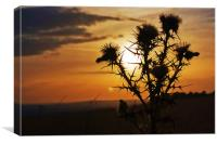 Thistle On The North Downs, Canvas Print