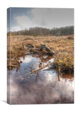 On The Bog, Canvas Print