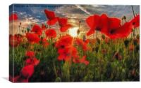 Poppies at Dusk, Canvas Print