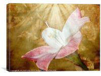 Lily in Lenabem Lightwaves, Canvas Print
