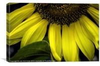 Slice of a Sunflower, Canvas Print