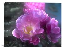 Pretty Pink Roses, Canvas Print