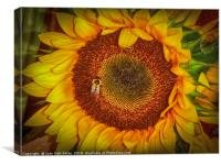Two Bees in a Bud, Canvas Print