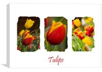 A Triptych of Tulips, Canvas Print