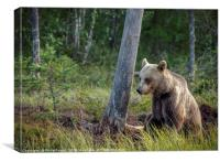 Wild Brown Bear by Tree in the Taiga Forest, Canvas Print