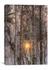 forest sunburst , Canvas Print