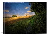 Path By The Field, Canvas Print
