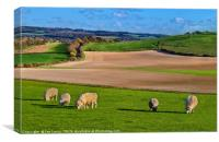 The Berkshire Downs In Springtime, Canvas Print