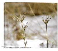 Asleep for the Winter, Canvas Print