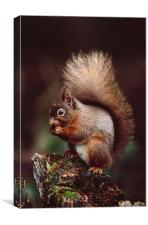 RED SQUIRREL ON AN OLD TREE STUMP, Canvas Print