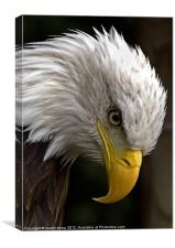 Eagles Eye, Canvas Print