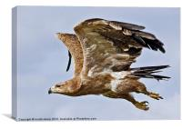 Rough-legged Buzzard, Canvas Print