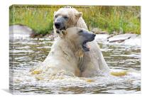 Polarbear's Play Fighting in Lake, Canvas Print