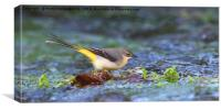 Grey Wagtail on the Leaf, Canvas Print
