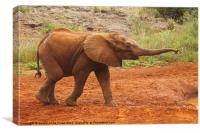 Little Elephant Looking For Food, Canvas Print