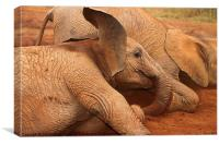 Baby Elephant Play Time, Canvas Print