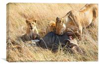 Lions at a Wildebeest Kill, Canvas Print