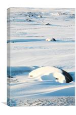 Early Morning on the Tundra Canada, Canvas Print