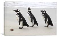 Magellanic Penguins on the Beach, Canvas Print