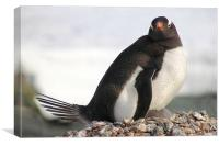 Gentoo Penguin With Chicks, Canvas Print
