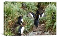 Macaroni Penguins in Their Rookery, Canvas Print