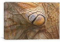 Abstract of Male Green Iguana Skin, Canvas Print
