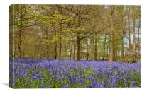 Bluebell Woods Greys Court Oxfordshire , Canvas Print