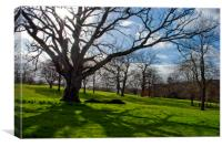 Old Tree at The Vyne Sherborne St John, Canvas Print