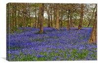 Bluebell Woods Greys Court Oxfordshire UK, Canvas Print