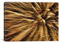Fireworks or Feathers?, Canvas Print