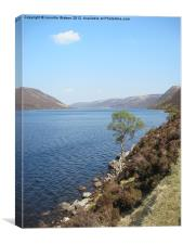 Birch tree by Loch Muick, Canvas Print