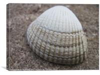 Cockle Shell, Canvas Print