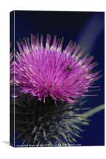 Pink Thistle, Canvas Print