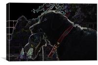 Glowing Labrador, Canvas Print