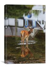 Baby Deer in the Harbour, Canvas Print