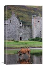 Deer at Lochranza, Canvas Print