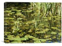 The Old Mill Pond, Canvas Print