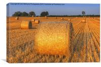 Bales at Sunset 4, Canvas Print