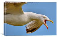 Seagull in Flight , Canvas Print
