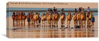 Beach Camels at Sunset 3, Canvas Print