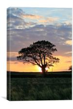 Shropshire Sunset, Canvas Print