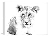 African Lion , Canvas Print