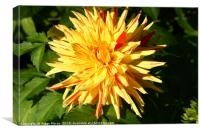 Dahlia in Greenwich Park  , Canvas Print