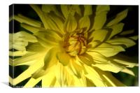 Yellow Dahlia in Greenwich Park   , Canvas Print