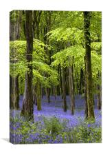 Bluebells at Hooke, Dorset, Canvas Print