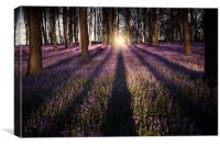 Kingswood Bluebells, Canvas Print