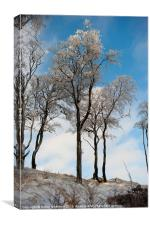 Ice Covered Trees, Canvas Print