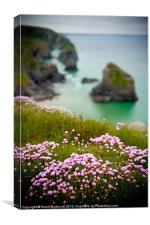 Wild Sea Pinks in Cornwall, Canvas Print
